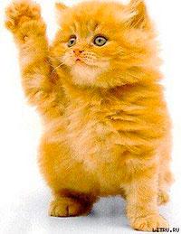 Необычайные приключения рыжего котенка по имени Мурр читать онлайн