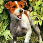 Собачье счастье читать онлайн